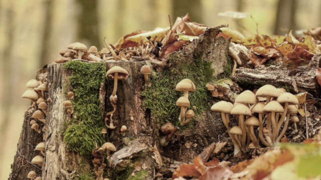 The Mysterious Hidden Kingdom: Fungi